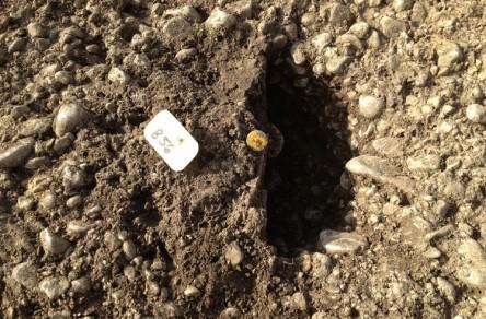 Schüssinsel Biel, archäologische Fundstätte